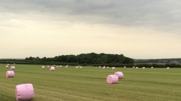 Pink Bales